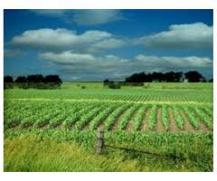 agricultural farm for sale
